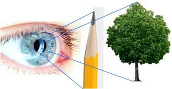 Eye Exercises for Myopia